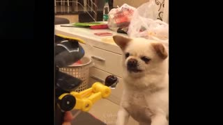 funny animal best funny video