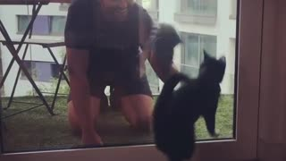 """Funny cat """"helps"""" owner clean the window"""