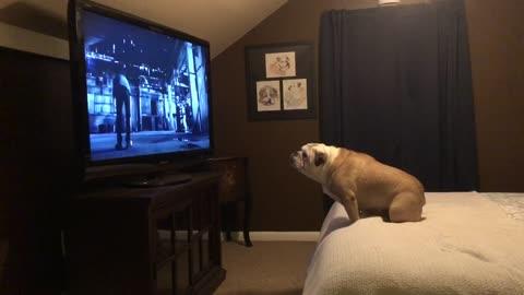 Bulldog watches horror movie trailer, has epic response