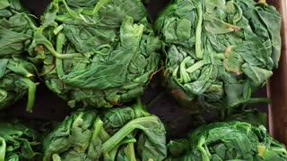Spring 2021 Spinach Harvest