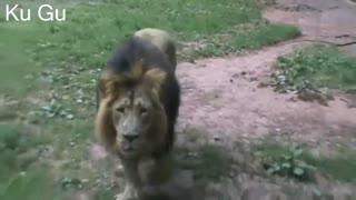 Animals Attack Human at Zoo