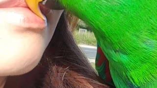 Cute Parrot Gives Mum a Kiss
