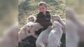 Ultimate Golden Retriever puppy attack dozen of puppies golden retriever puppies