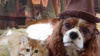 Dog and Cat Duo Dress Hogwarts Style