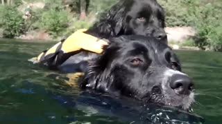 Rescue Dog Saves ANOTHER Dog With Bravery So Loving