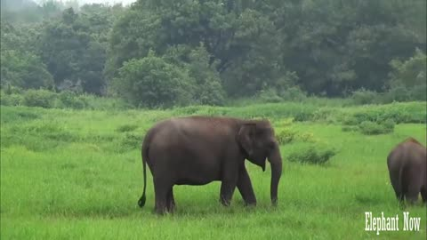 A Beautiful Elephant Herd Spotted Anew