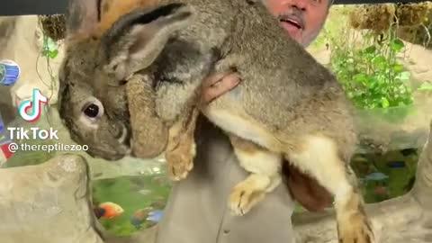 Biggest rabbit 🐇