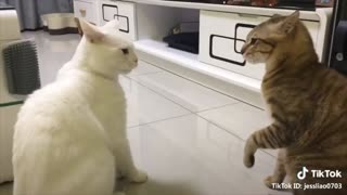 Cats talking compilation part 1