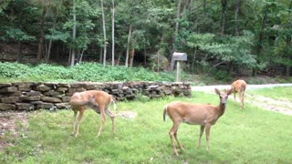 Woman tries to explain to 3 deer that she is out of food.