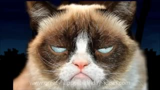Grumpy Cat Sings Happy Birthday To You - Funny