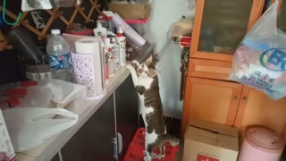 Sneaky cat caught trying to steal food