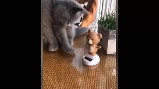 Funny Animals Videos   Funny Dogs   Funny Cats Videos