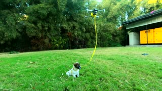 Drone Walks the Dog