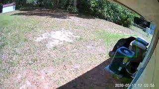 Bear Investigates Backyard for a Feed