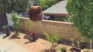 Woman saves her dog from bear
