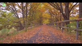 ride through autumn forest hd