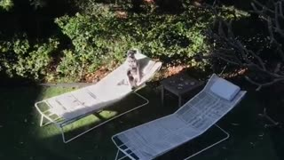 Dog Sitting Like Human