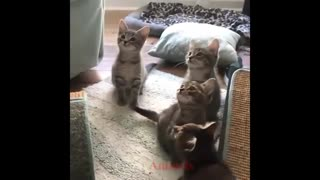 Super cute baby kittens adorable!