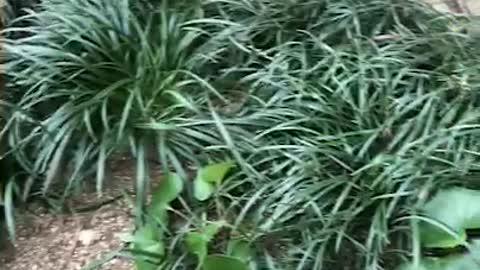 Hiding baby cat