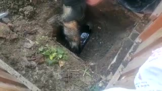 Moment Firemen Rescue Trapped Cat From Sewage Pipe