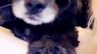 Funny dog tells owner about his day Part 2