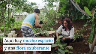 Video: mariposas de exportación en Costa Rica