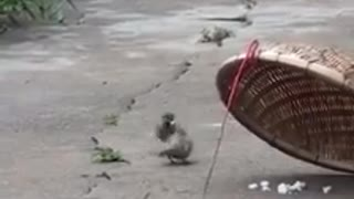 A bird sacrifices his life for another bird