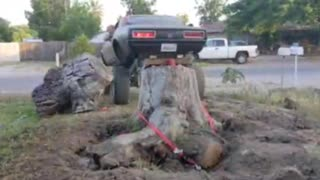1967 Camaro pulling oùt a stump.