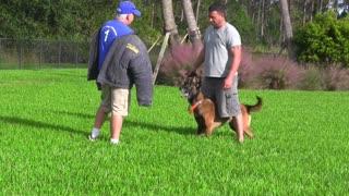 Training SECRETS Elite Protection Dogs Instructional video