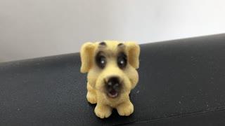 Cute dog very happy dog