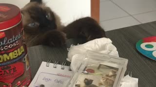 Sneaky cat gets caught trying to steal owner's stuff