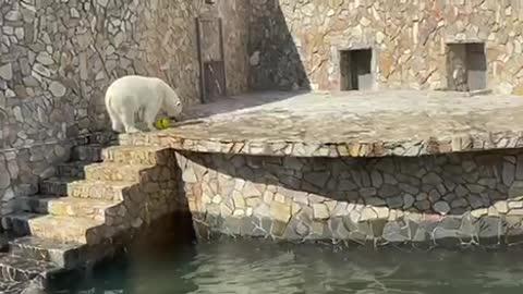 polar bear playing with a ball