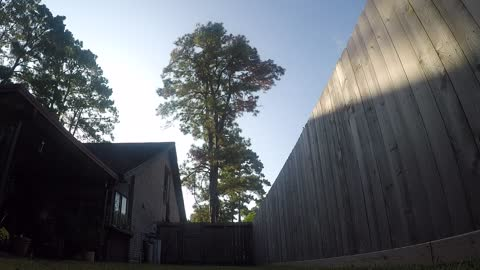 Tree Removal - Time Lapse