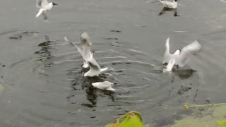 Hungry seagulls eat bread