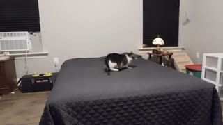 Fast jumping cat