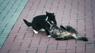 Playful cats play together on the street in a sexy way