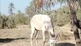 donkey and donkey
