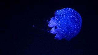 Jellyfish Glowing