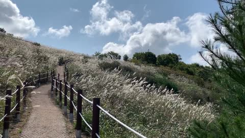 Wonderful silver grass field