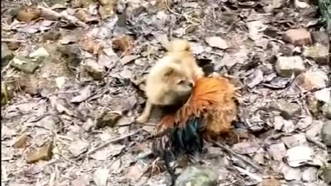 Funny Dog Fight😍