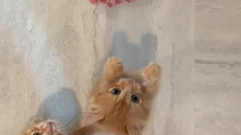 Kittens Meowing For Thier Momy
