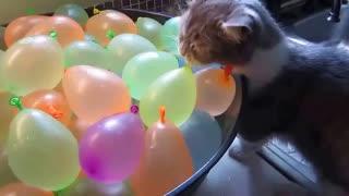 25 Funny animals videos, Witzige Tiere Videos, Divertidos videos de animales