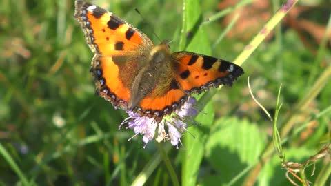 A nice butterfly on a tree branch - man & camera