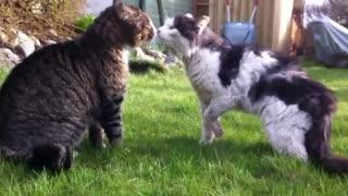 Cats Fight like beasts