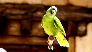 #Singing Talking Laughing Funny Smart Clever #Parrots Viral Video Compilations