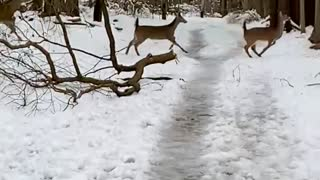 Deer Surprise