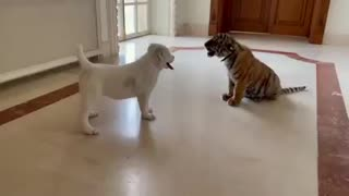Best friends forever small tiger and dog!