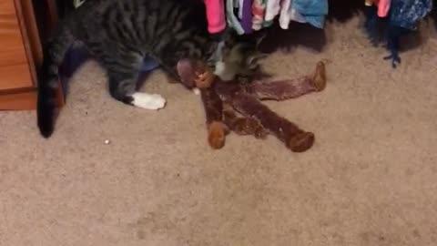 Monkey vs. kitten