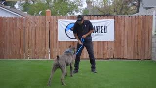 Dog Training Episode 1