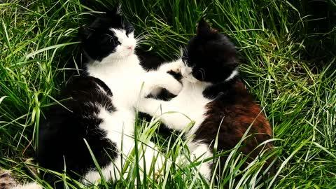 cats cutness
